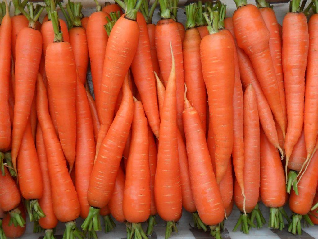 Como Semear Cenouras